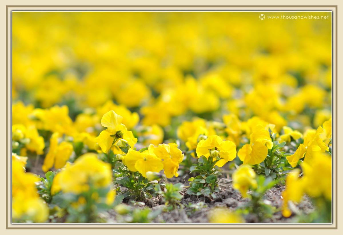 22_spring_flowers