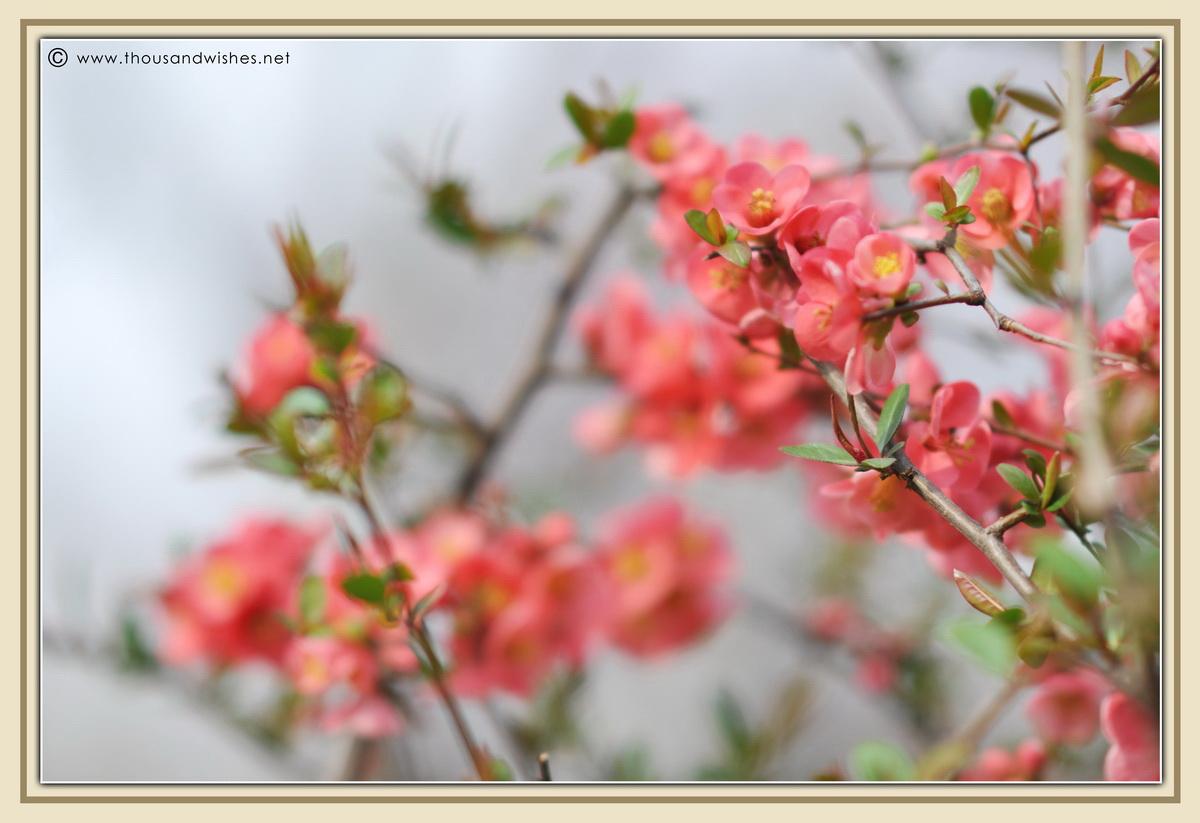23_spring_flowers