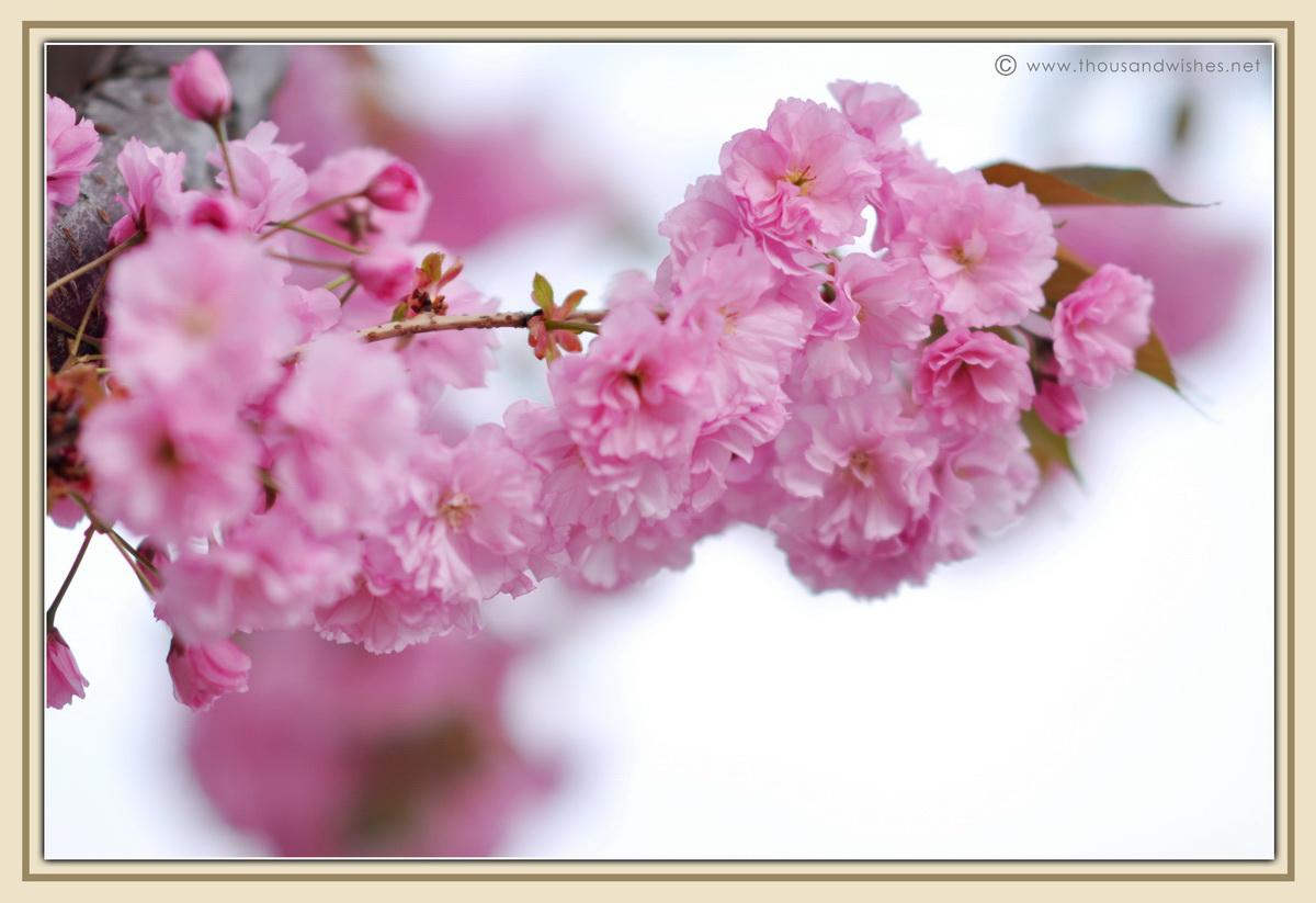 25_blooming