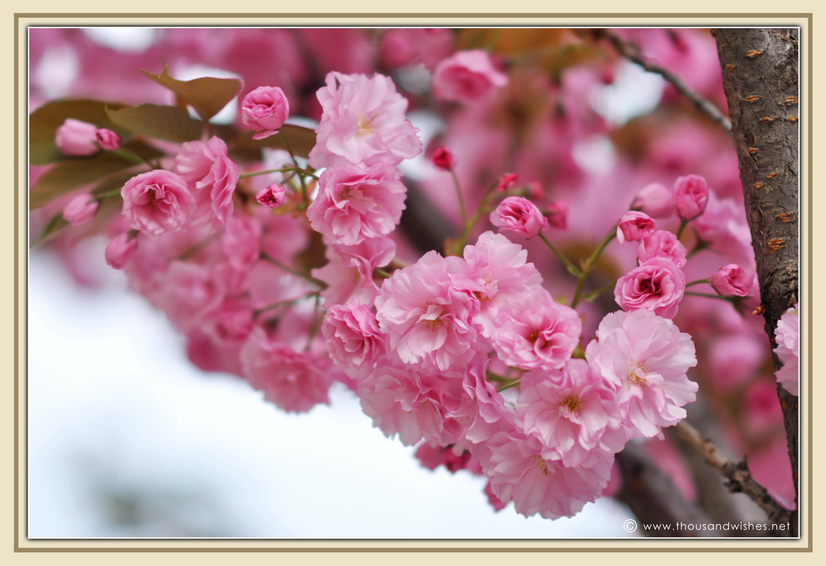 26_blooming