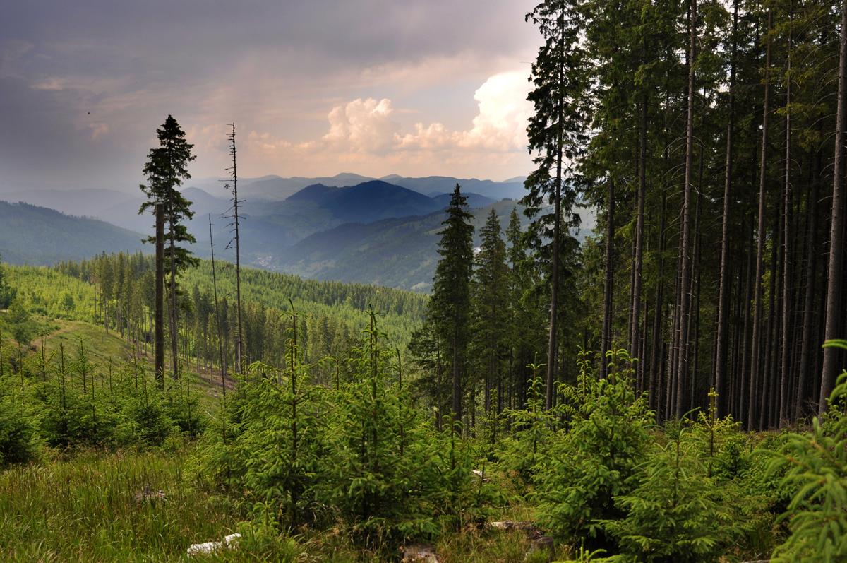 37_giumalau_mountains_bucovina_romania