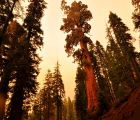 Sequoia National Park - US road trip | 473 Views | Fame 3.43