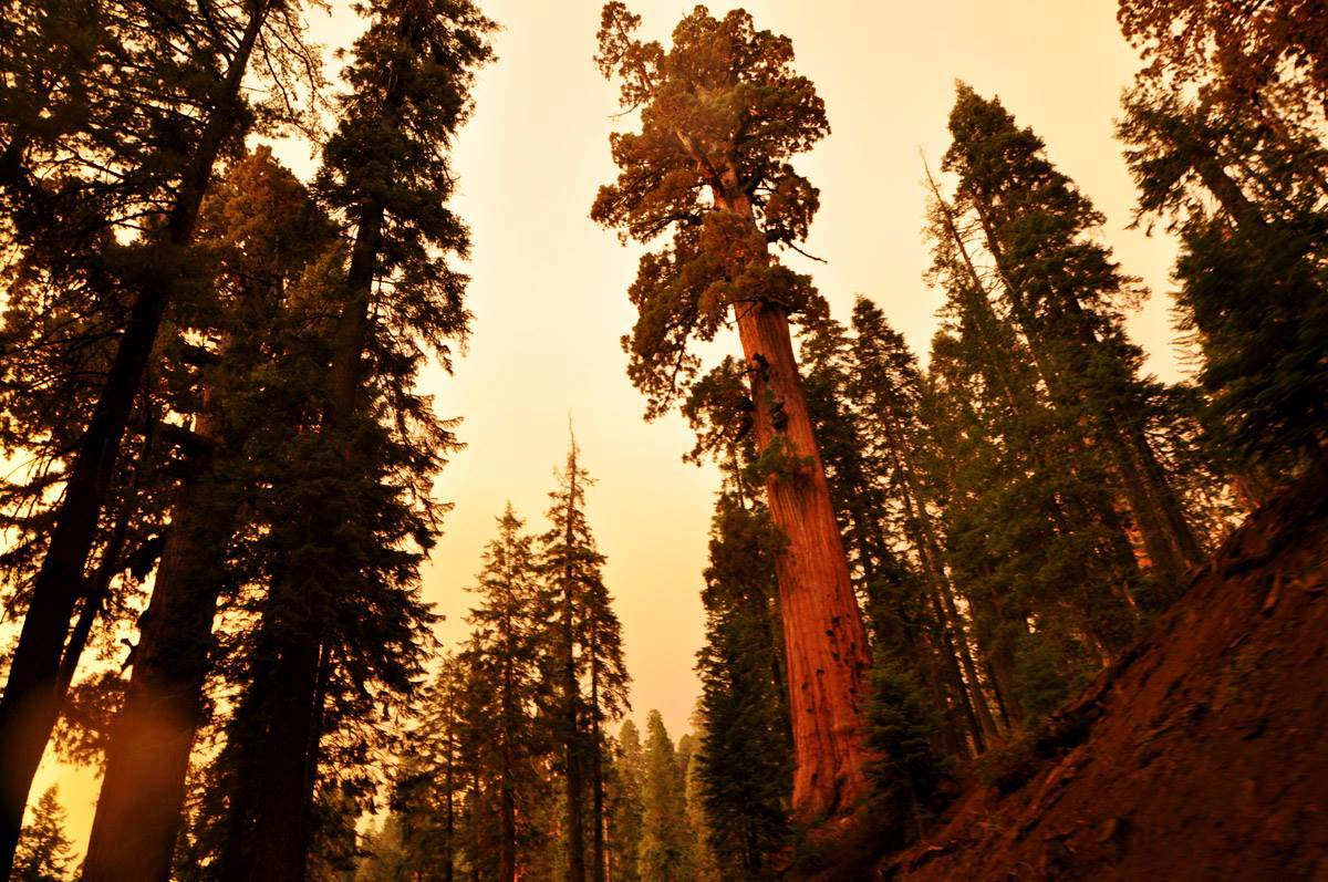 01_sequoia_usa_road_trip_california