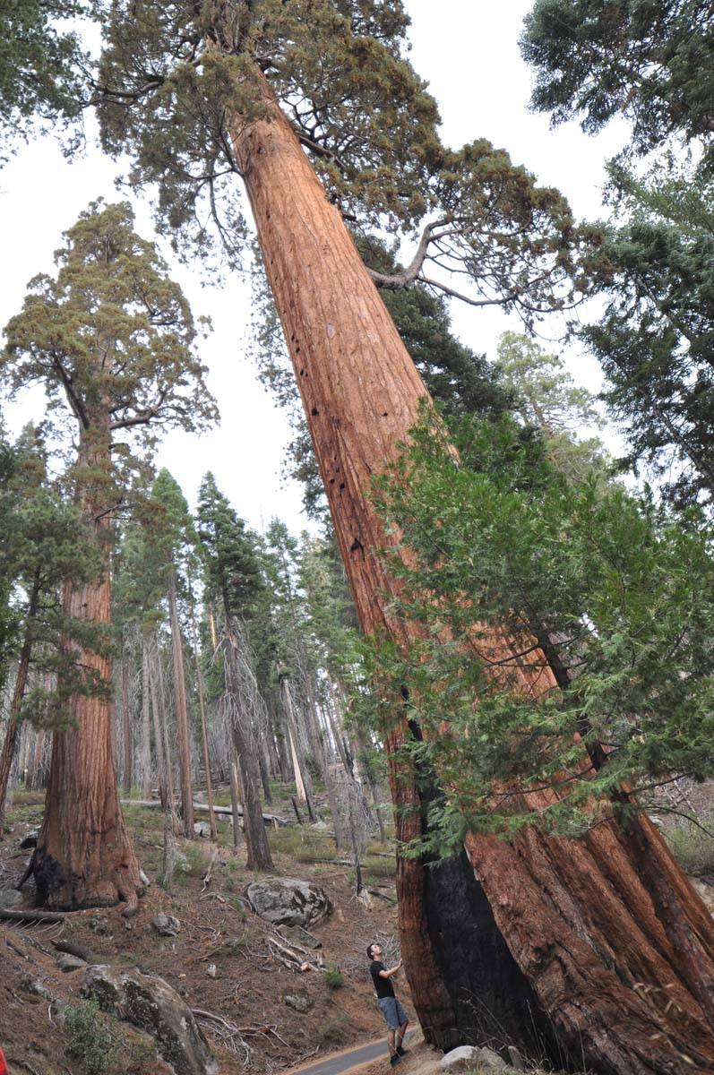 15_sequoia_usa_road_trip_california