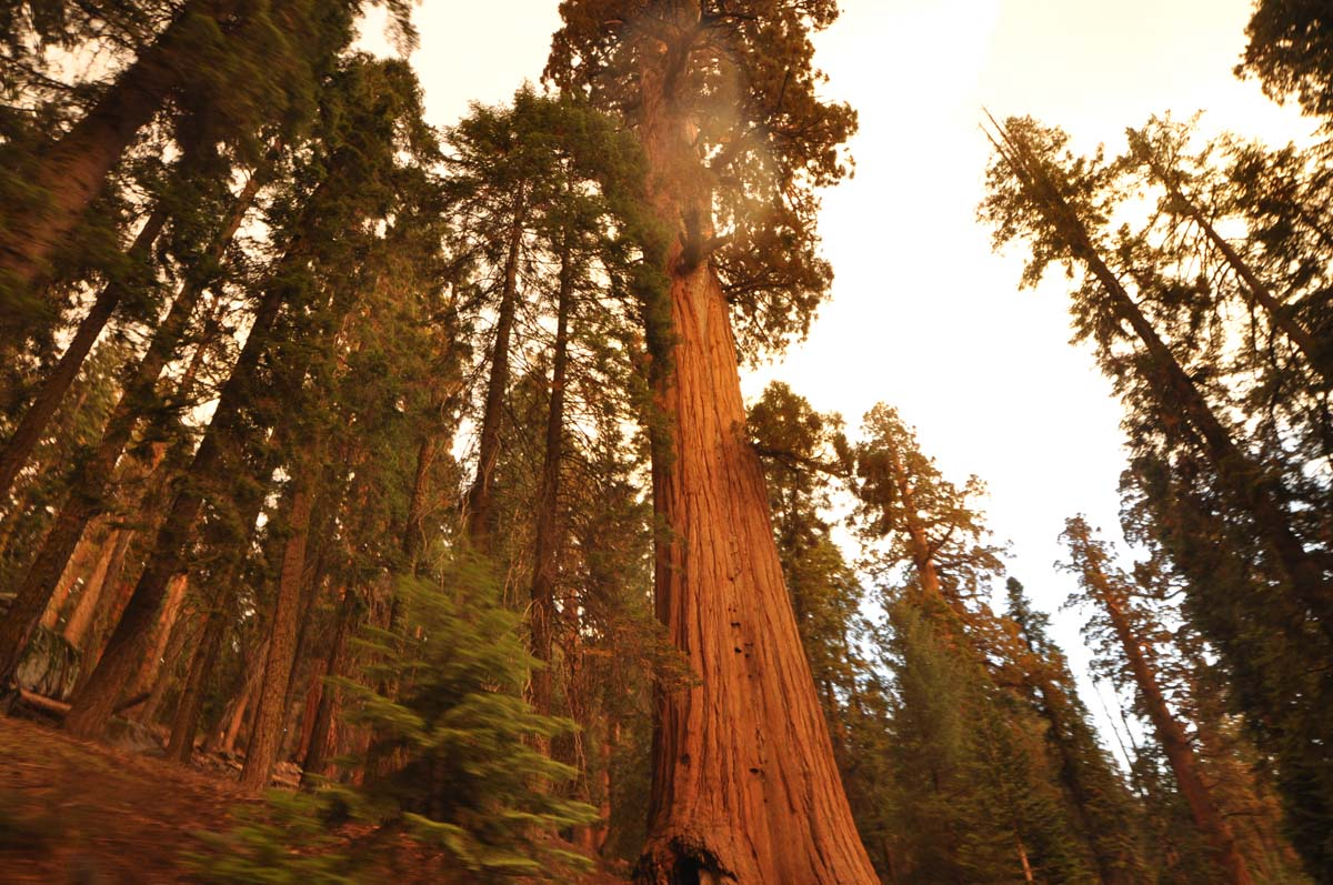 20_sequoia_usa_road_trip_california