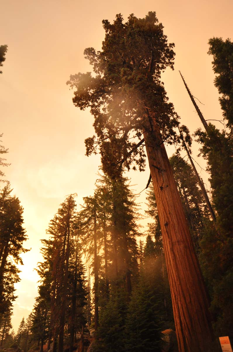 21_sequoia_usa_road_trip_california