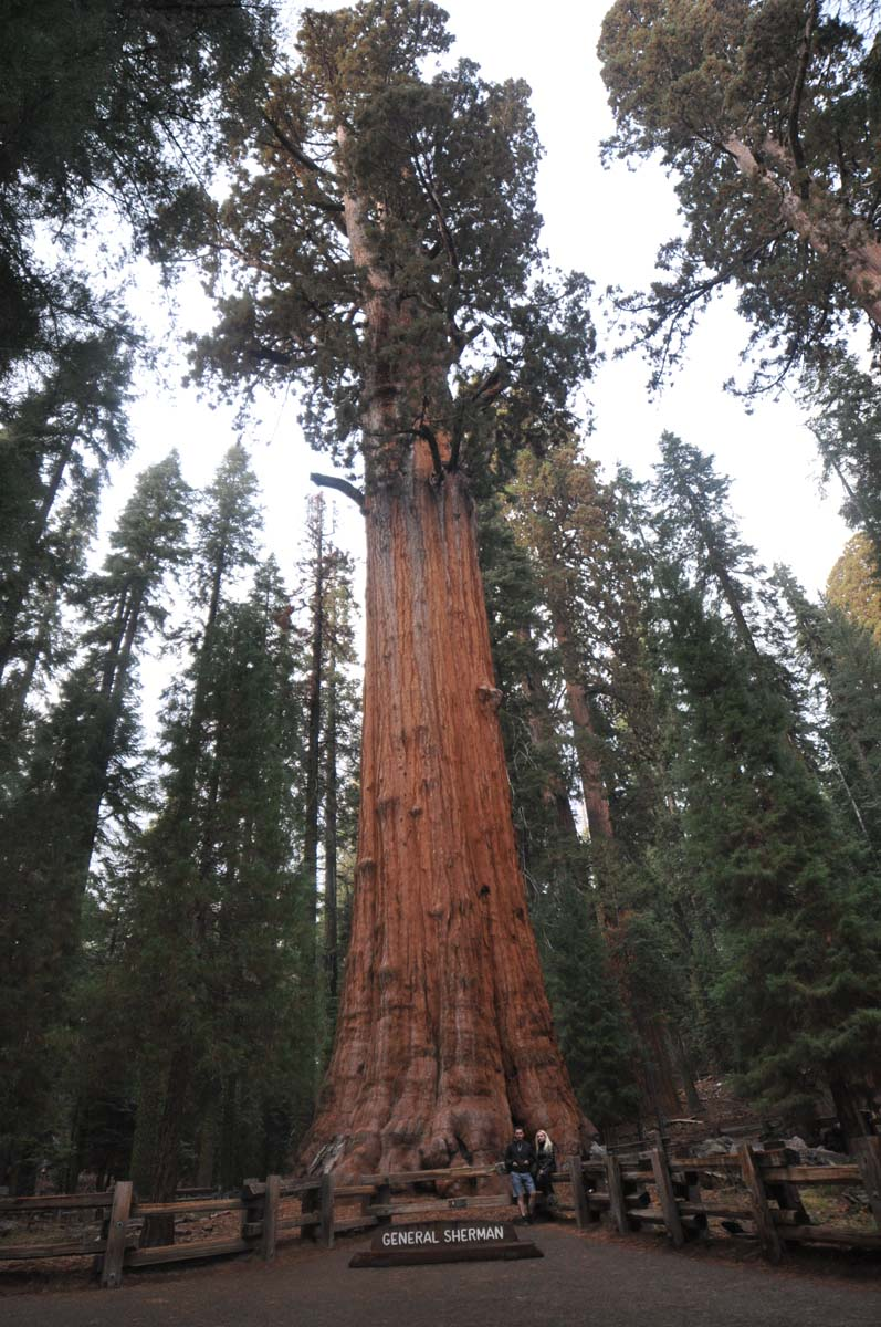 23_sequoia_usa_road_trip_california