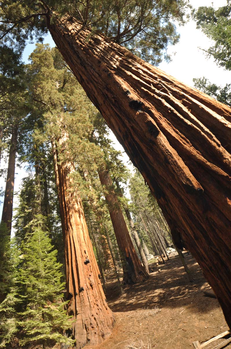 26_sequoia_usa_road_trip_california
