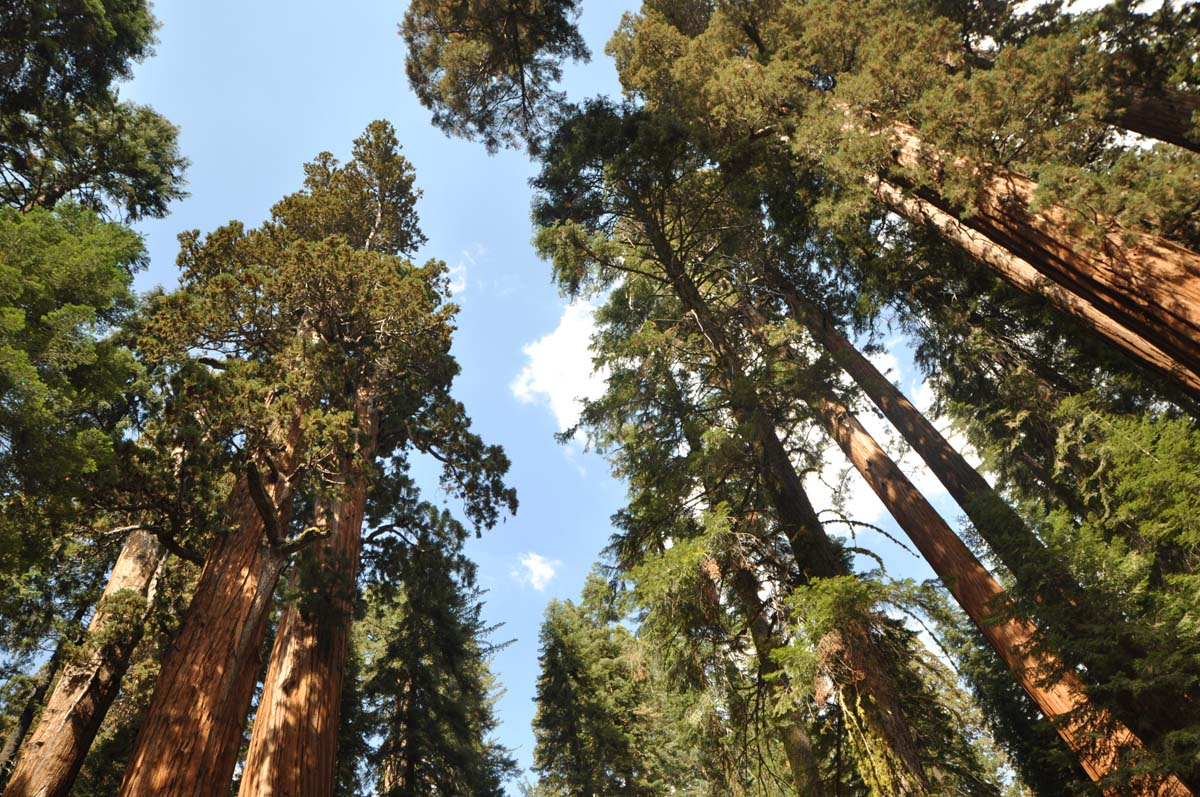 27_sequoia_usa_road_trip_california