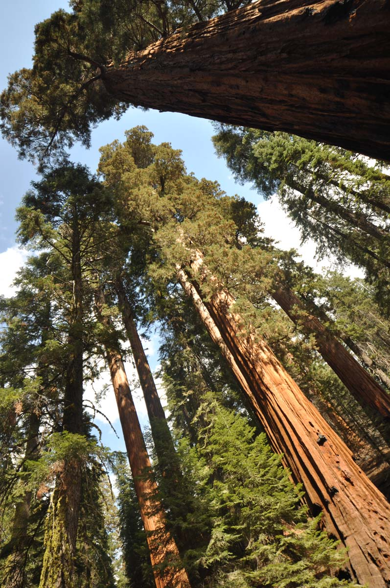 28_sequoia_usa_road_trip_california