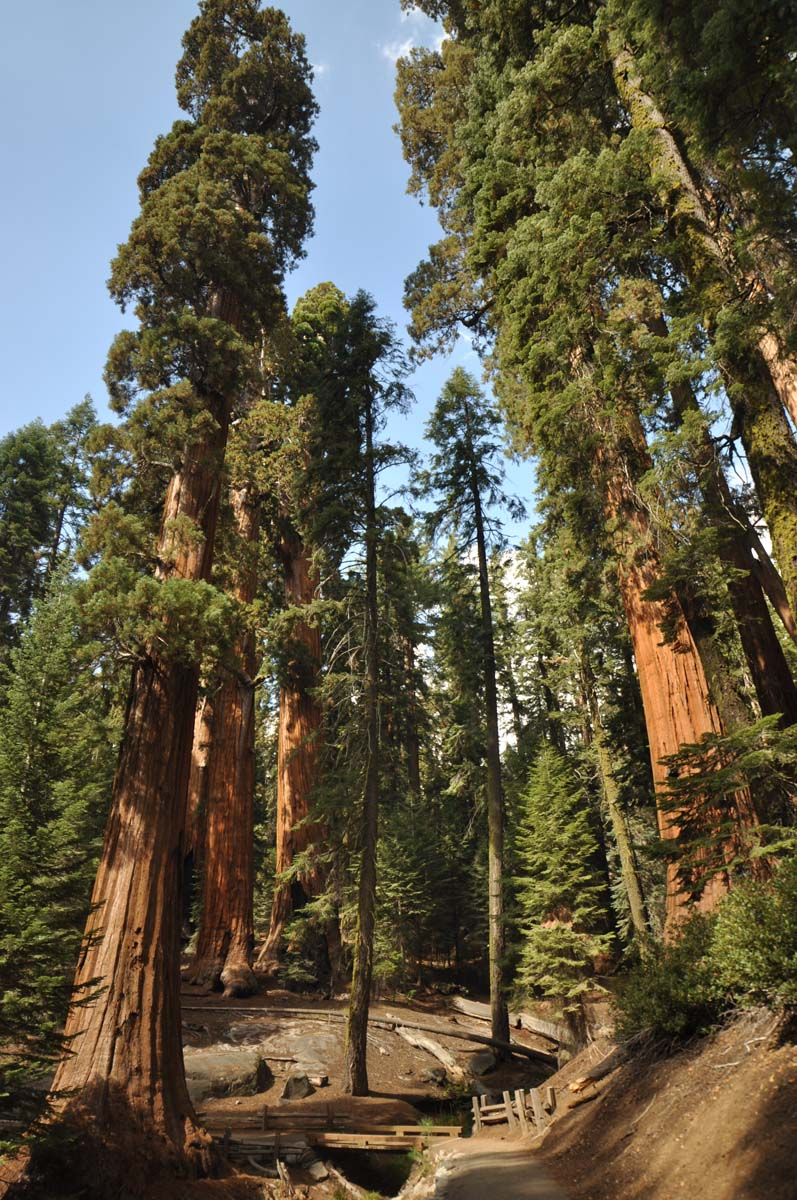 29_sequoia_usa_road_trip_california