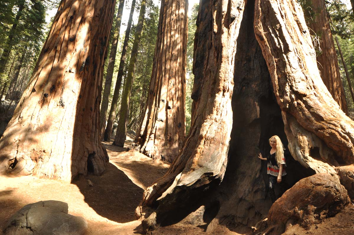 30_sequoia_usa_road_trip_california