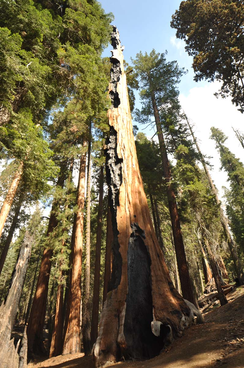 31_sequoia_usa_road_trip_california