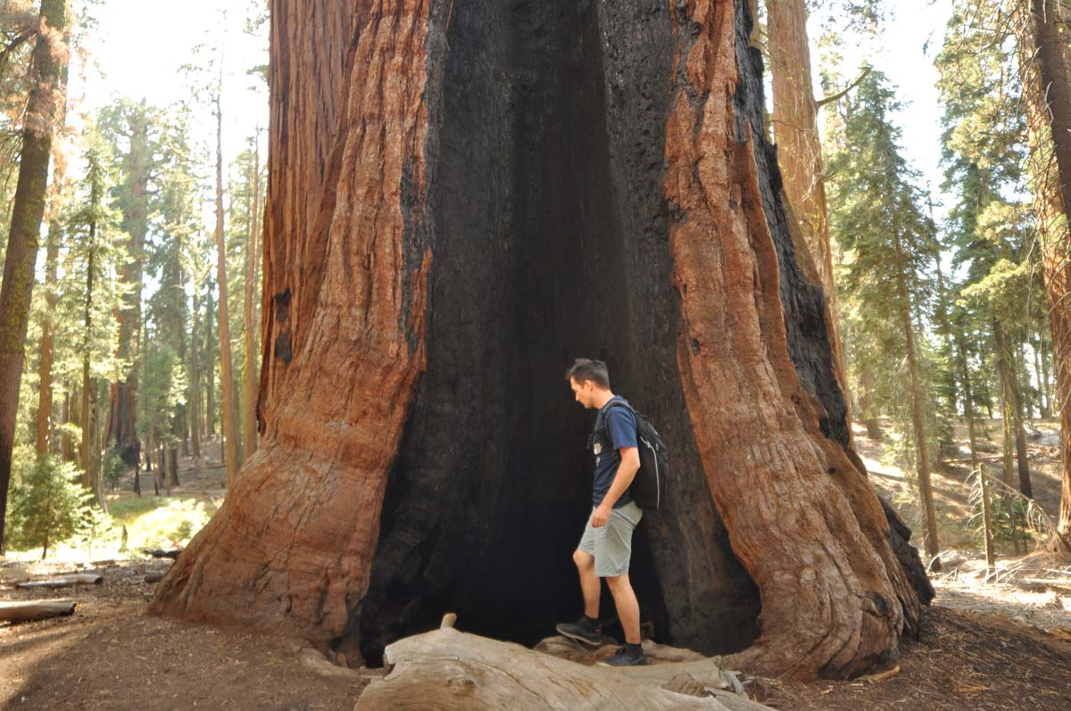 36_sequoia_usa_road_trip_california