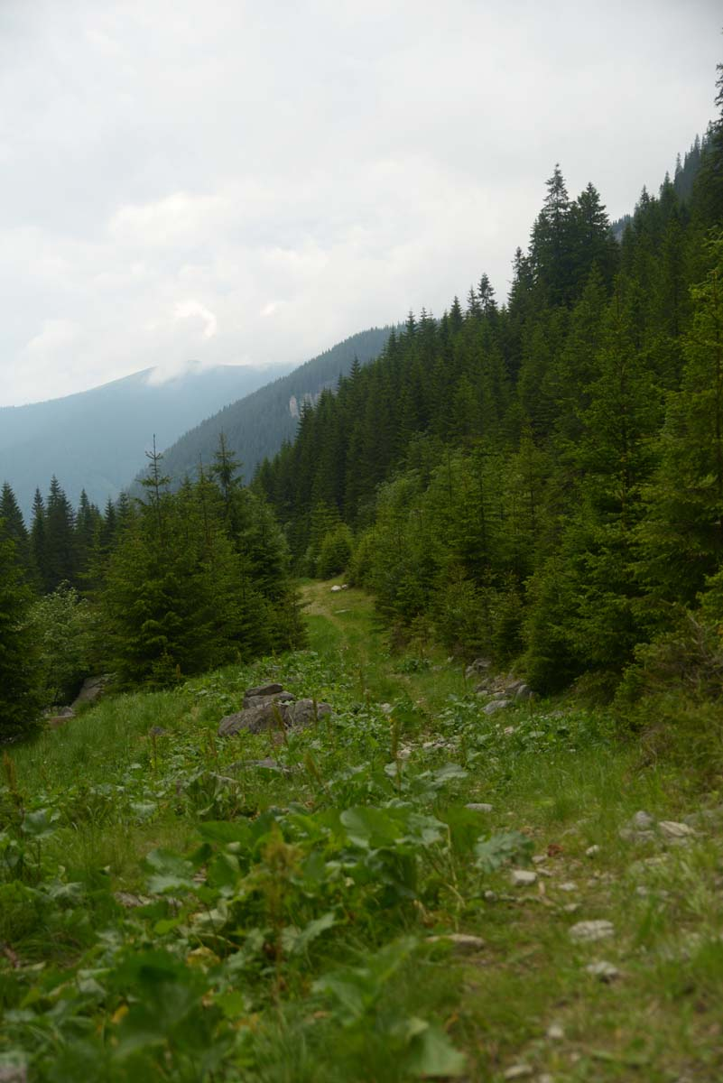 73_parang_mountains_carpathians_romaniaat