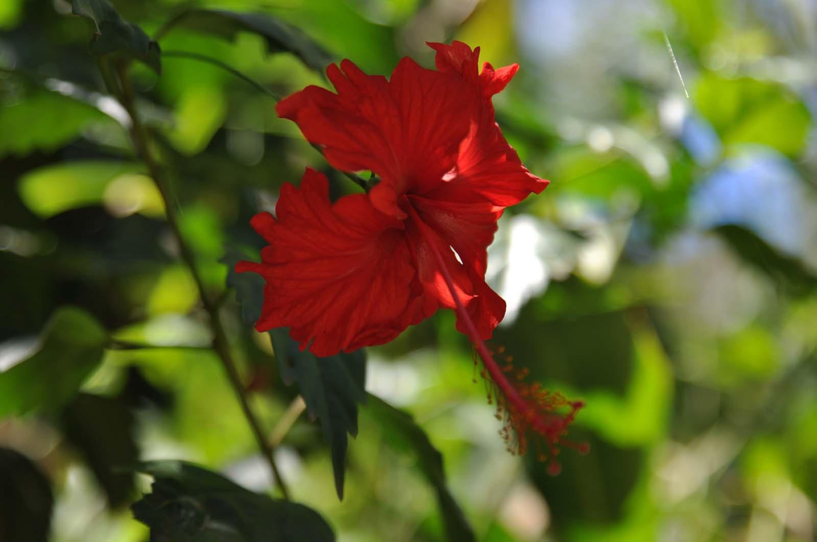 037_maui_hawaii_island