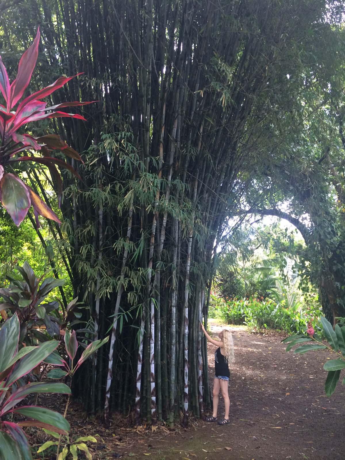 104_maui_hawaii_island
