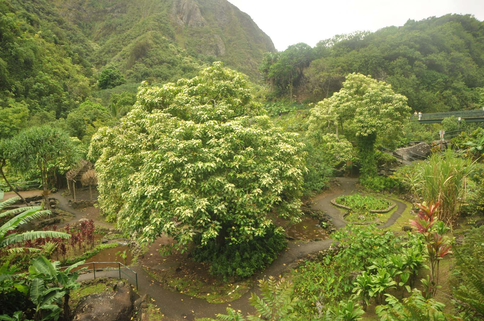 002_iao_valley_maui_hawaii