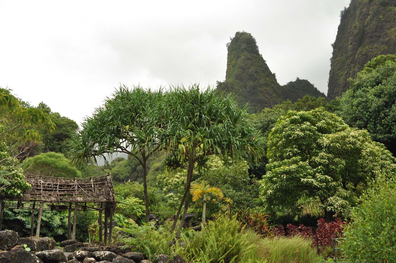 007_iao_valley_maui_hawaii