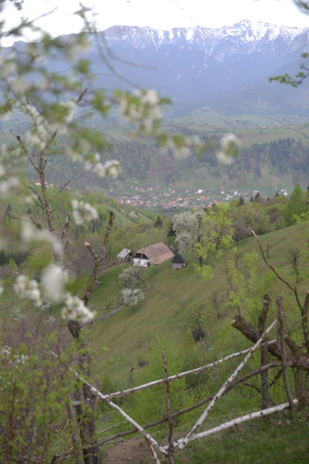 27_magura_piatra_craiului_travel_romania