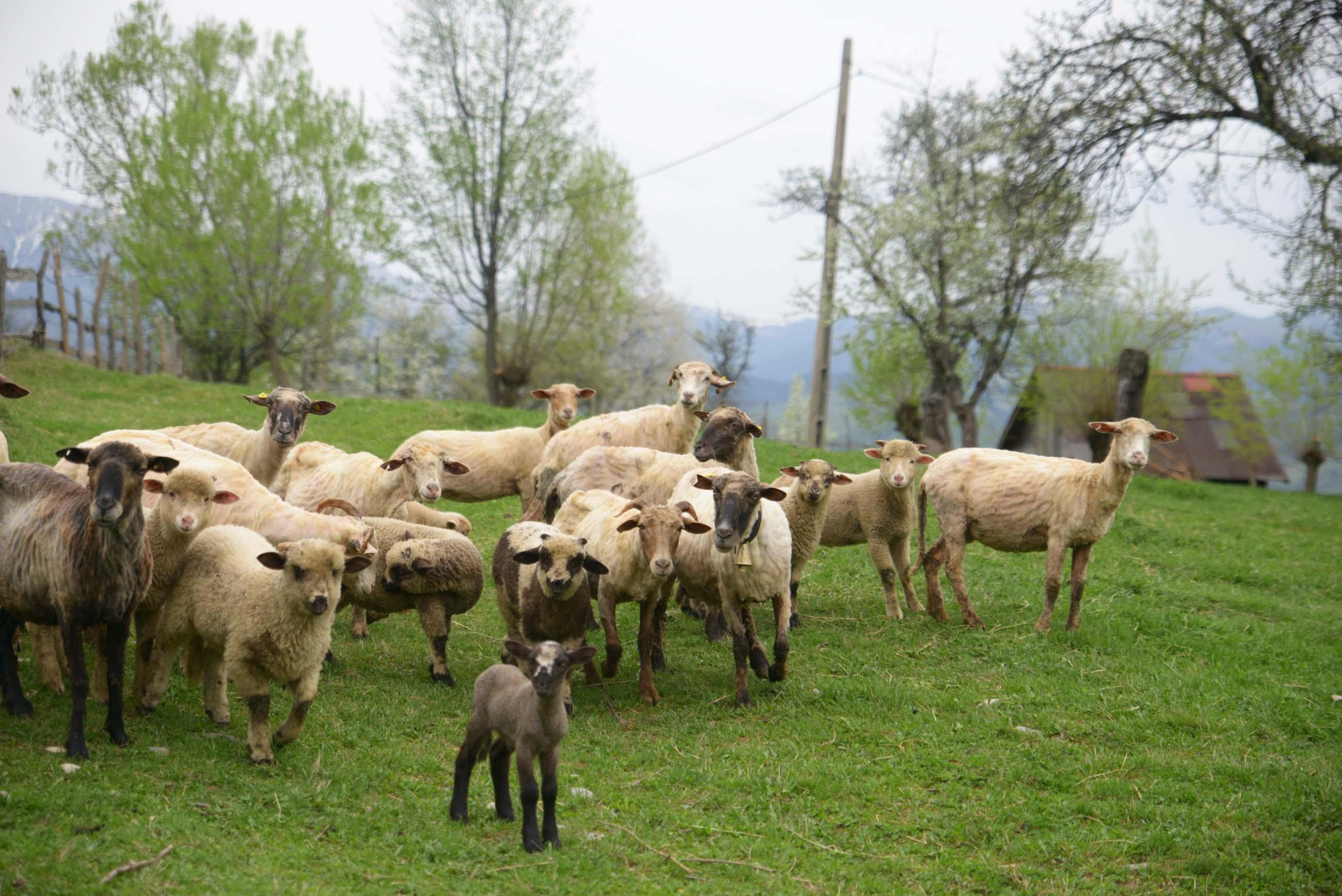 06_hiking_magura_piatra_craiului_carpathians