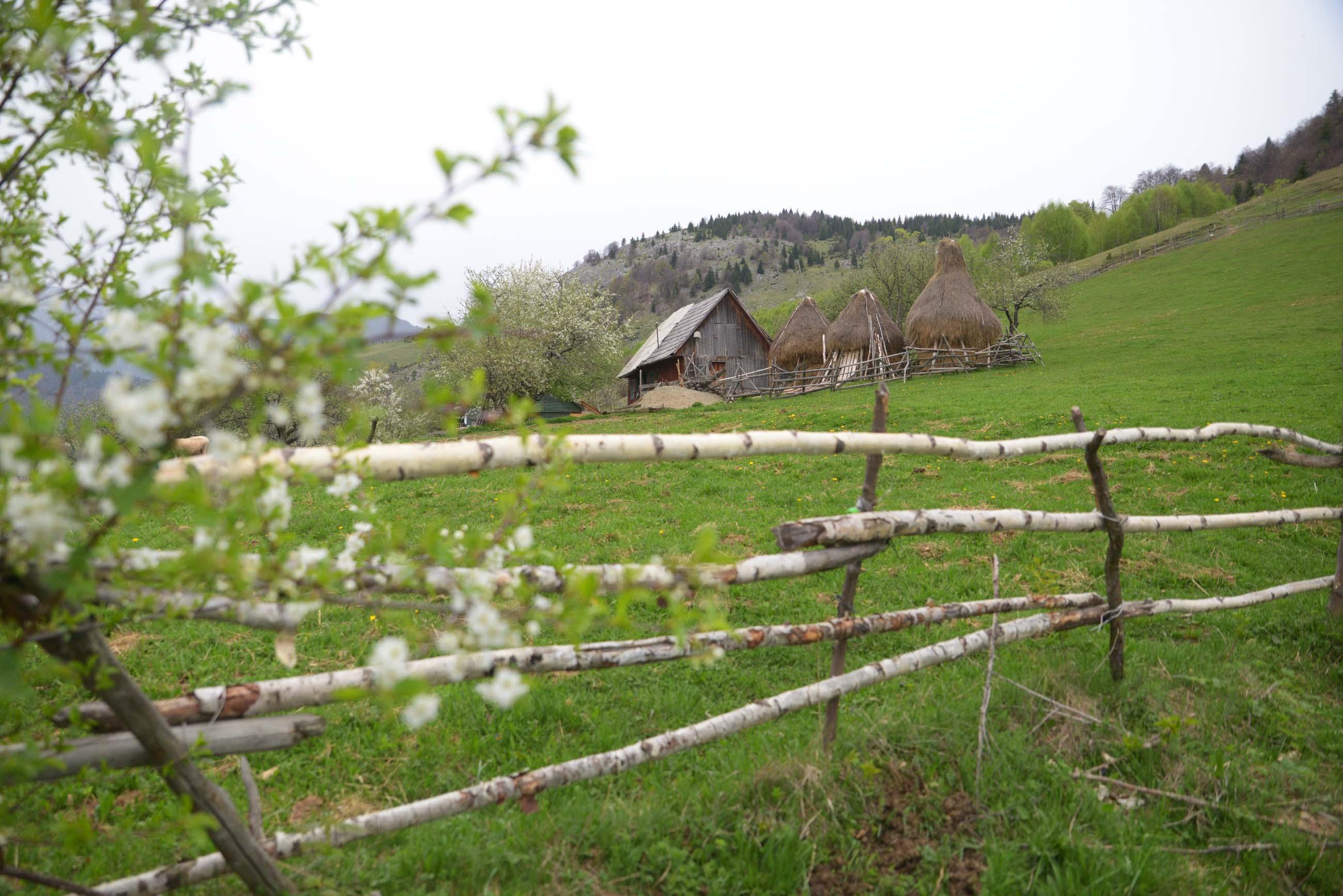 07_hiking_magura_piatra_craiului_carpathians
