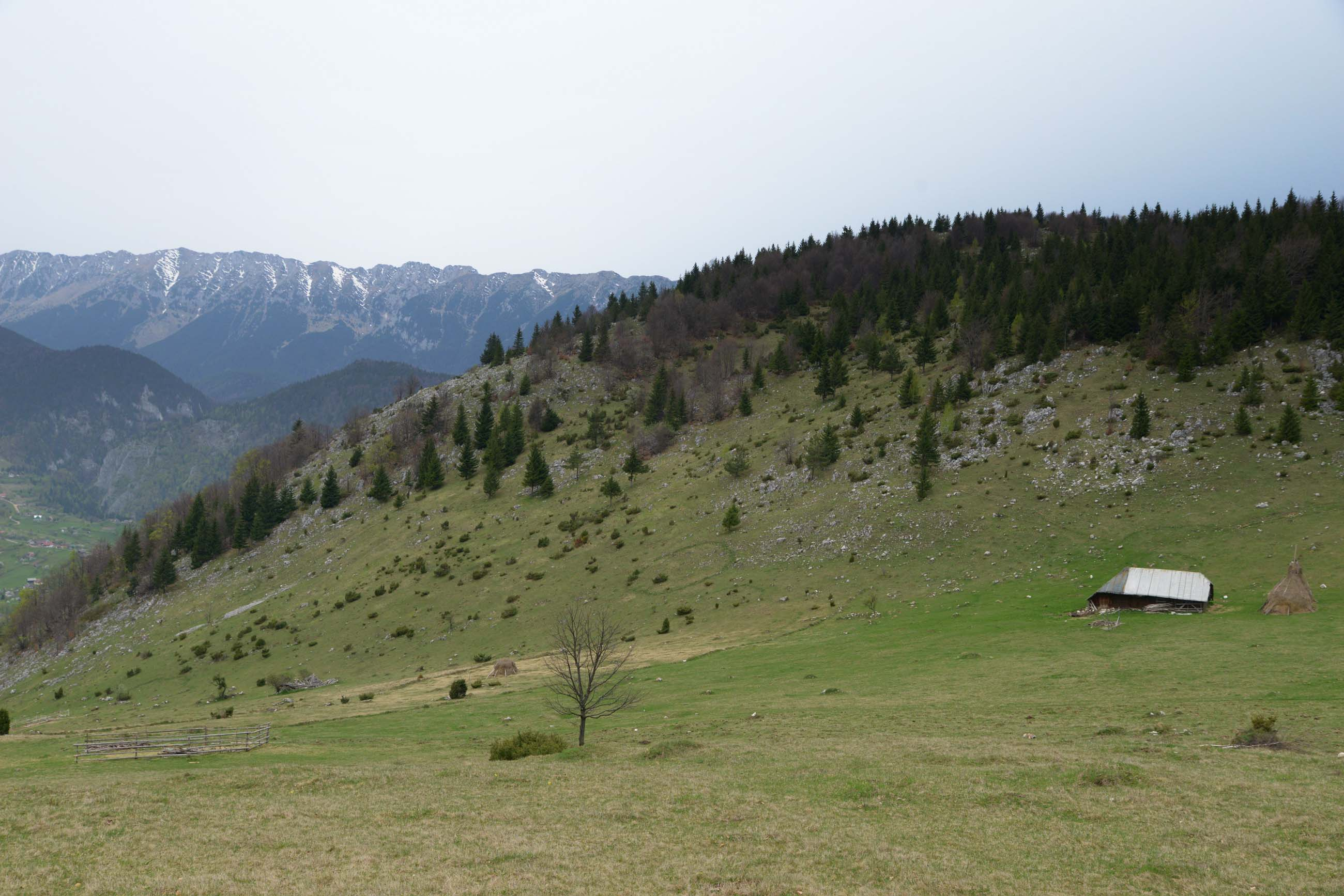 17_hiking_magura_piatra_craiului_carpathians