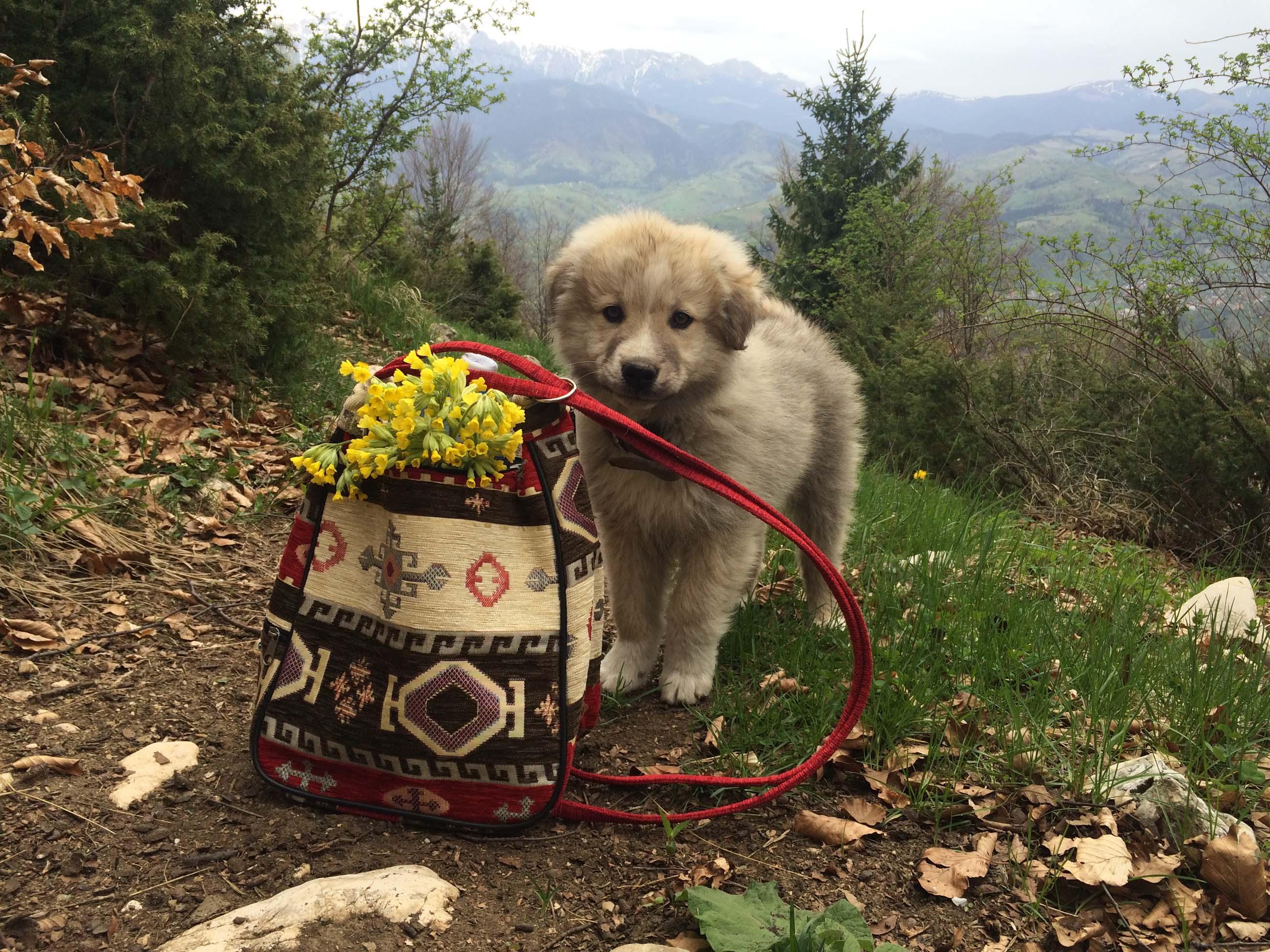 22_hiking_magura_piatra_craiului_carpathians
