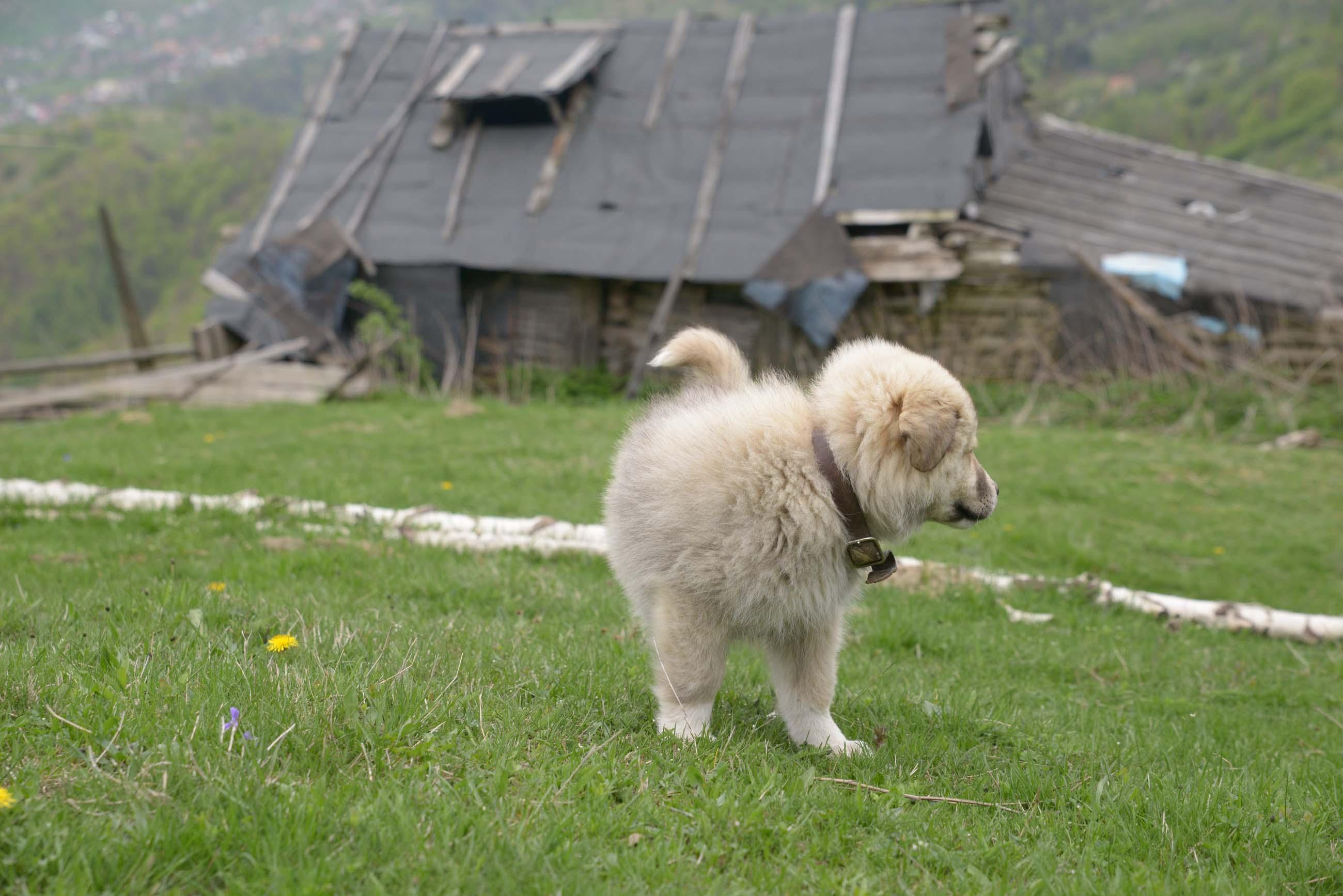 25_hiking_magura_piatra_craiului_carpathians