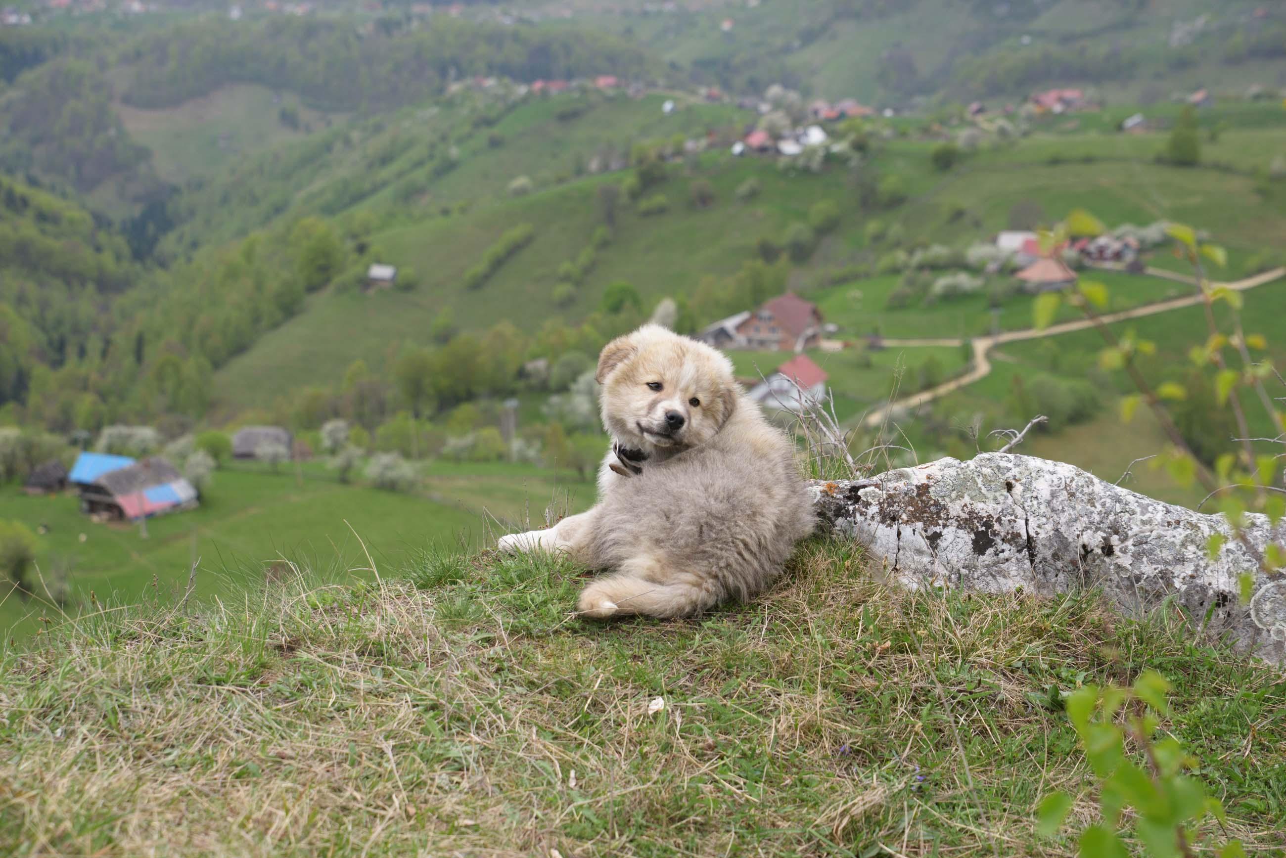 27_hiking_magura_piatra_craiului_carpathians