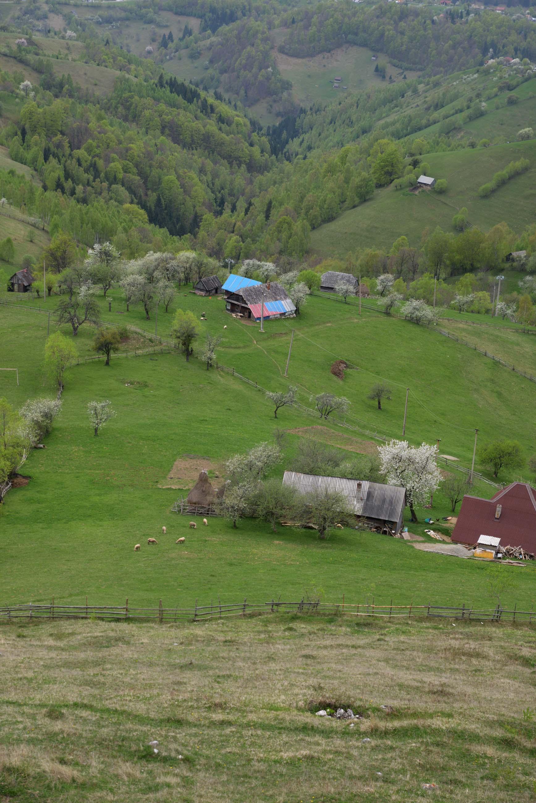 29_hiking_magura_piatra_craiului_carpathians