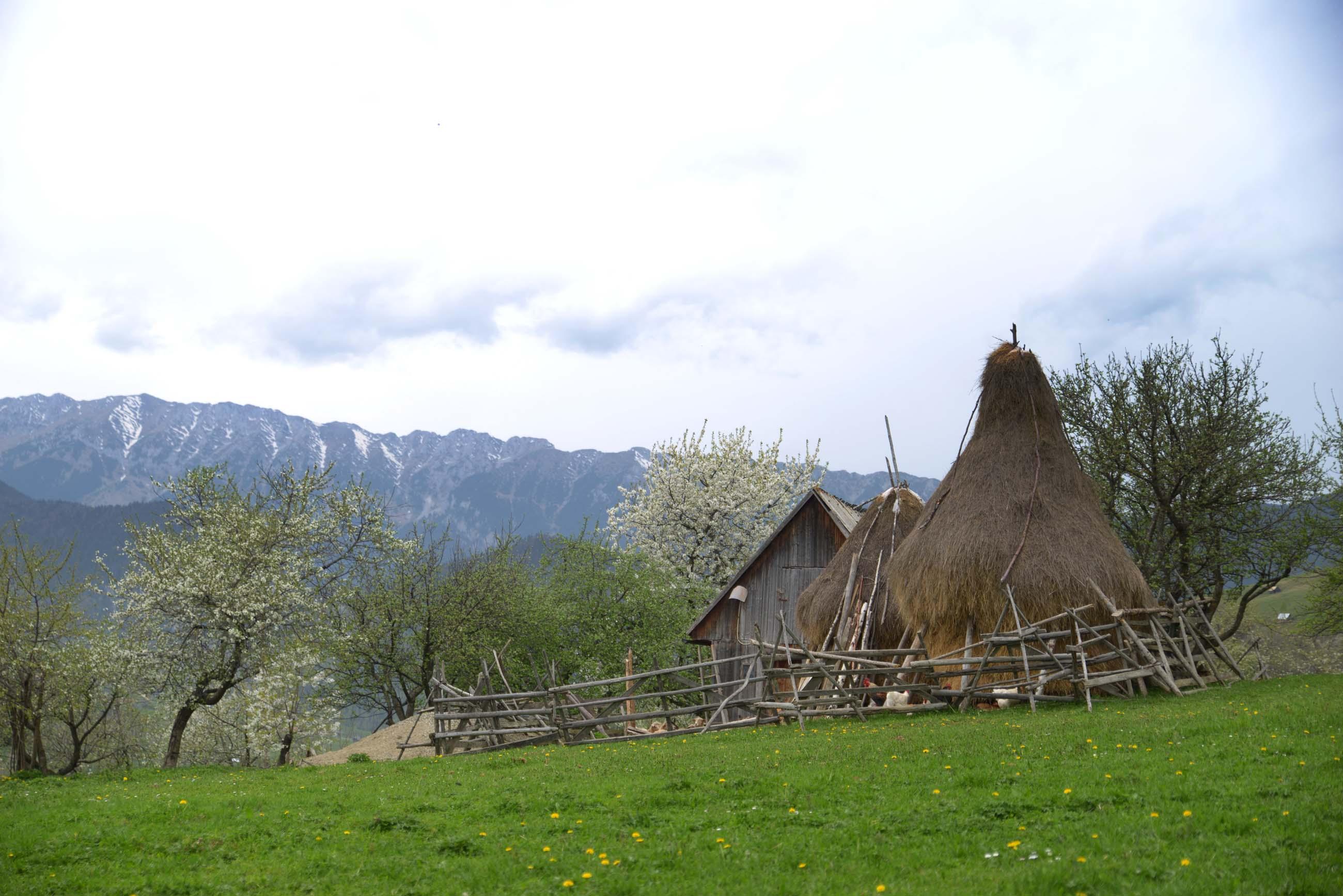 34_hiking_magura_piatra_craiului_carpathians