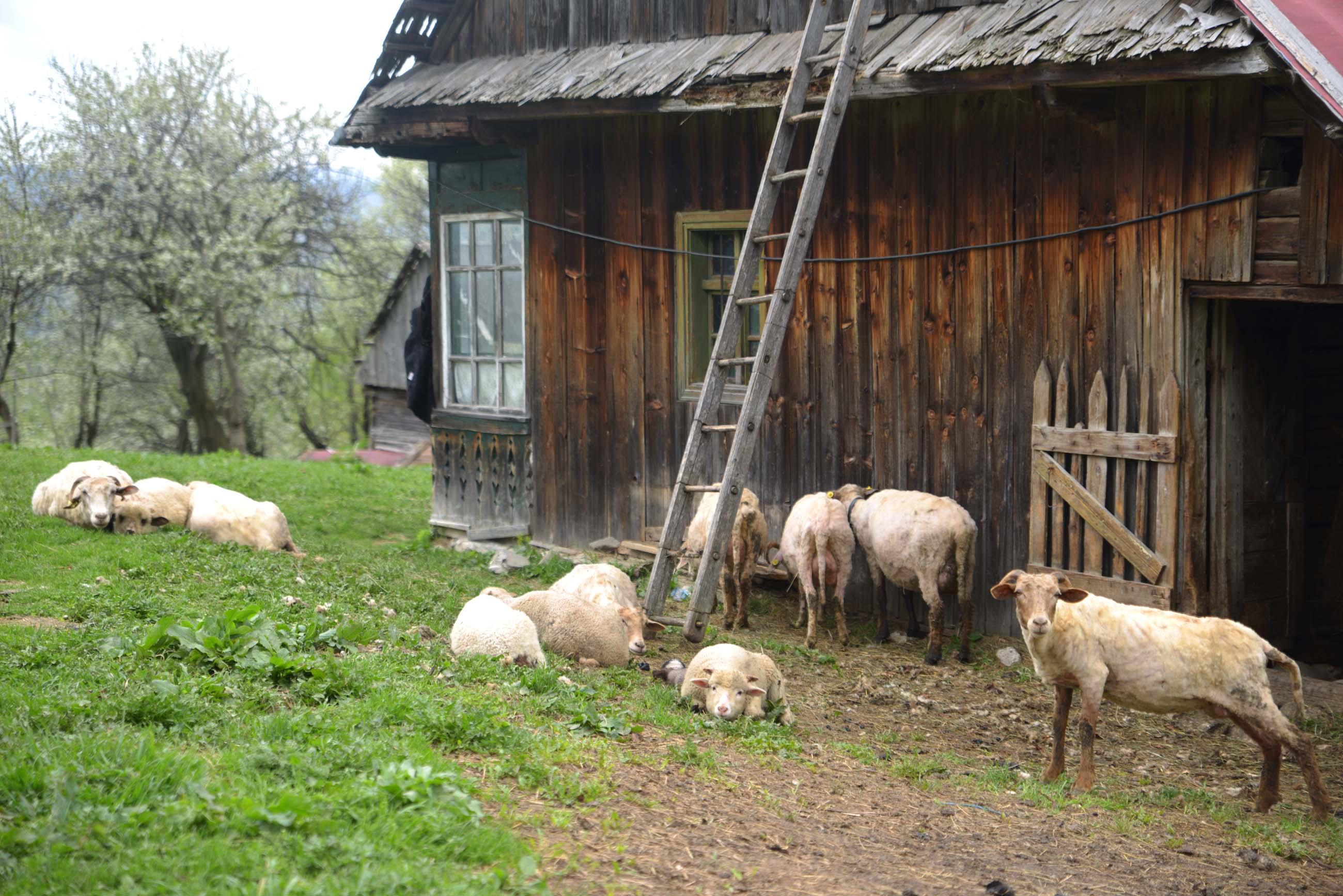 35_hiking_magura_piatra_craiului_carpathians
