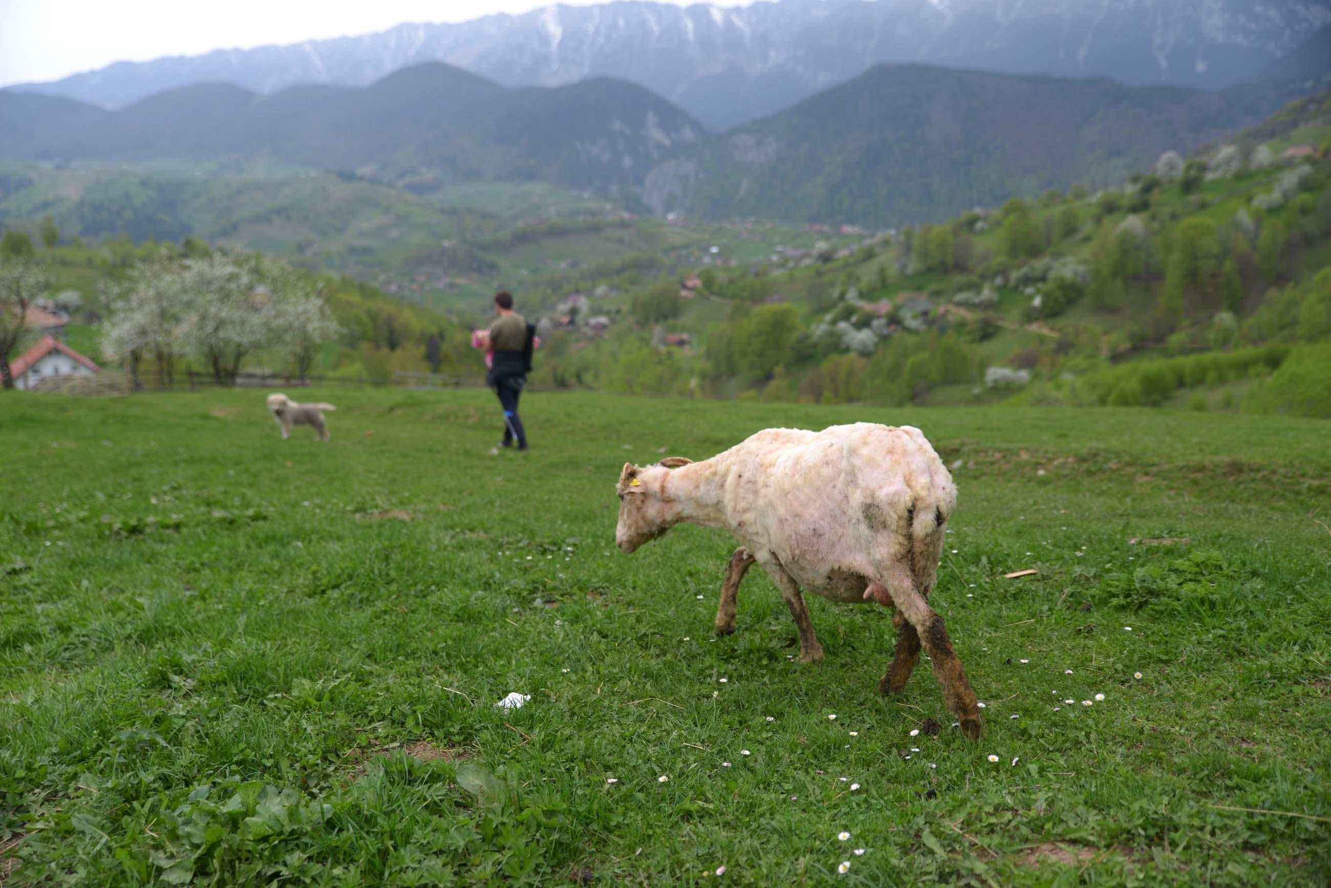 36_hiking_magura_piatra_craiului_carpathians
