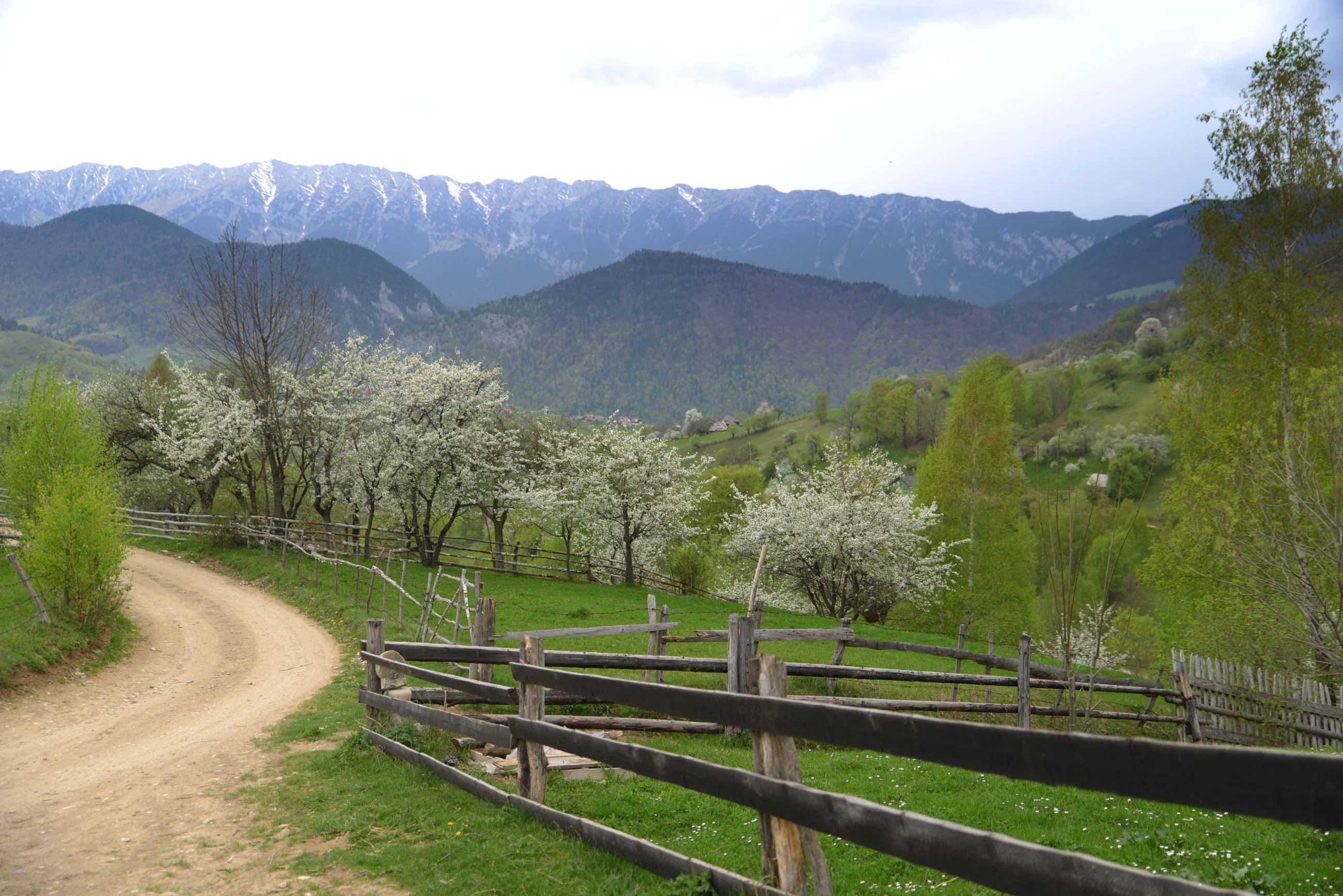 37_hiking_magura_piatra_craiului_carpathians