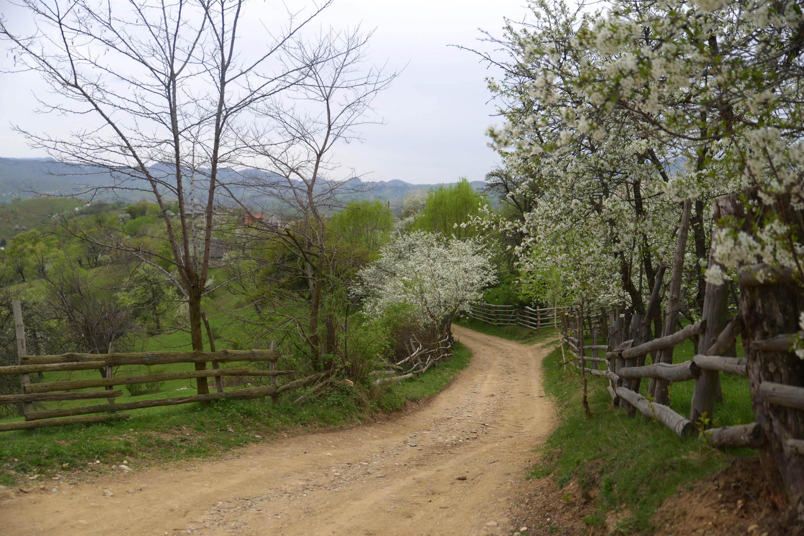 40_hiking_magura_piatra_craiului_carpathians