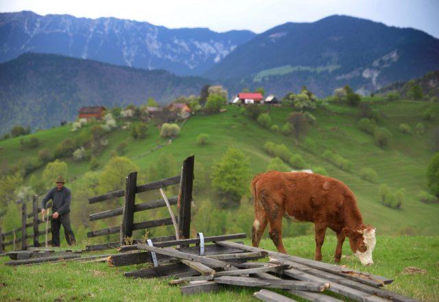 42_hiking_magura_piatra_craiului_carpathians