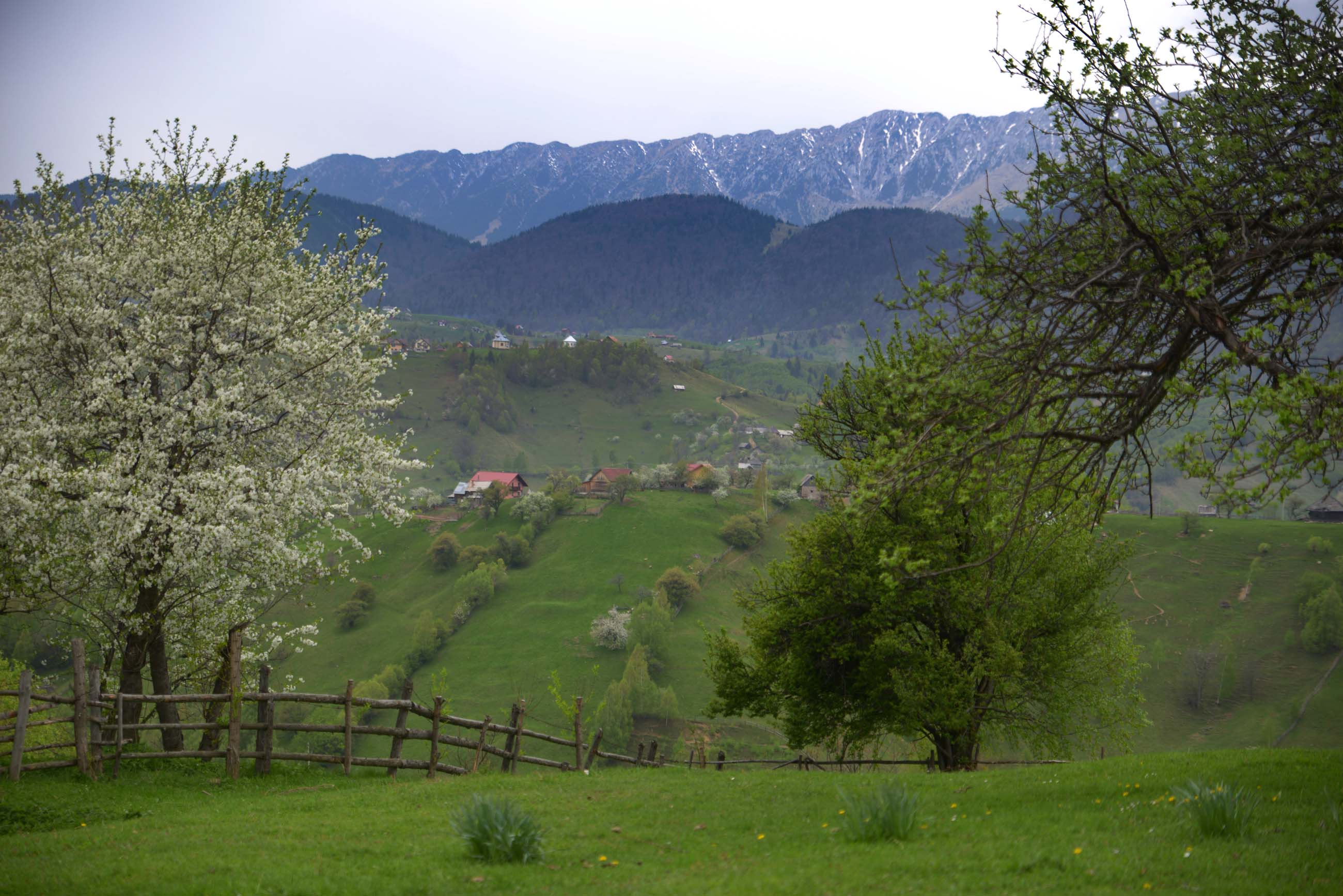 45_hiking_magura_piatra_craiului_carpathians