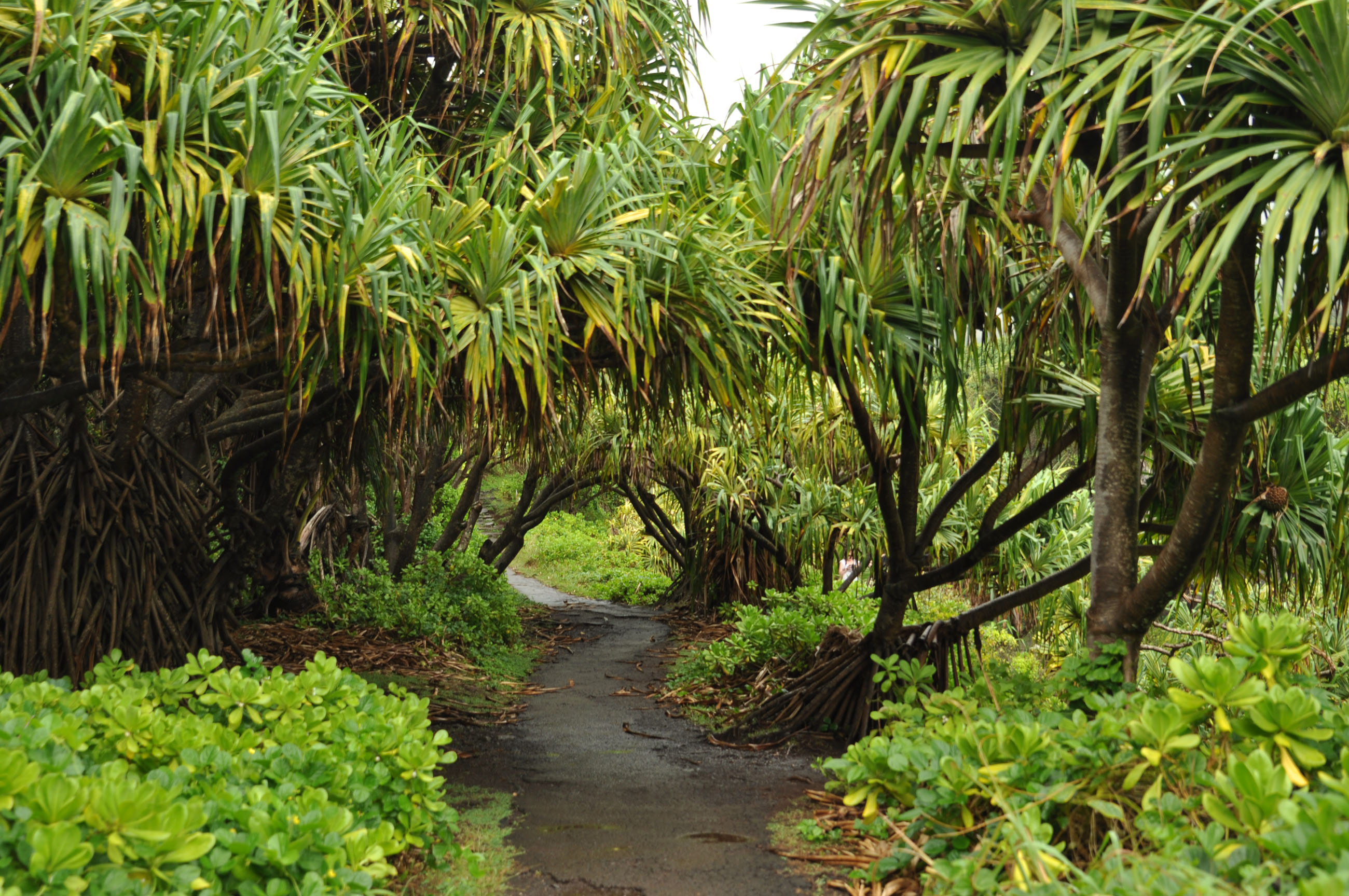 05_maui_hawaii_pipiway_trail